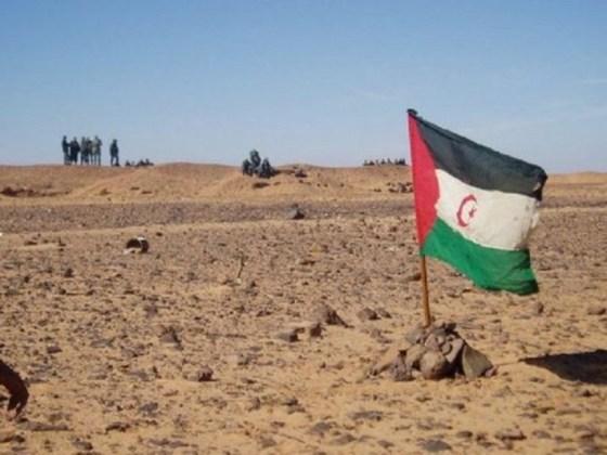Le Polisario détruit 2 500 mines antipersonnel