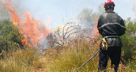 Près de 200 arbres fruitiers ravagés par les incendies