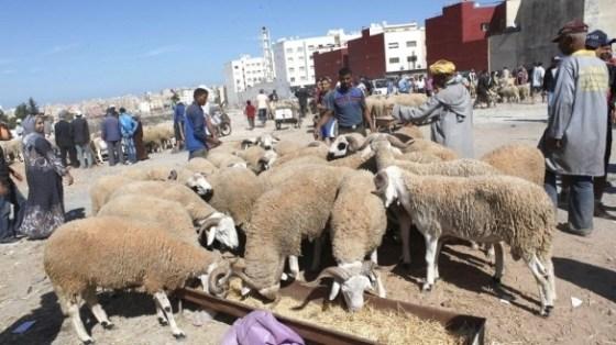Alimentation en eau: des mesures pour l'Aïd-el-Adha