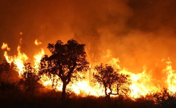 Feux de forêt:1 079 hectares détruits en deux mois