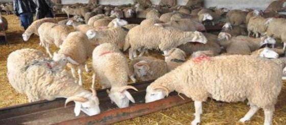 Les éleveurs se plaignent d'une mauvaise gestion