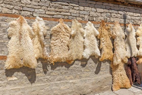 Aïd El Adha:Une campagne de collecte des peaux d'ovins