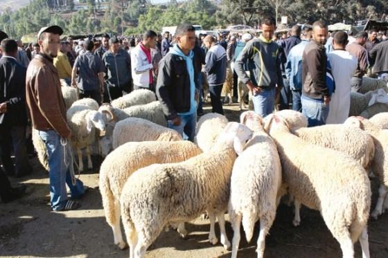 Plus de cent points de vente de moutons ouverts à Alger