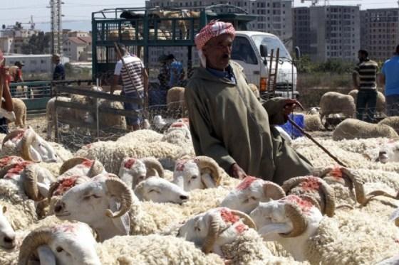 Le mouton toujours cher … jusqu'à 120 000 DA