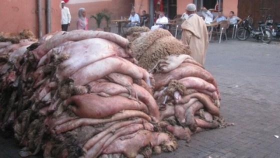 Près de 900 000 peaux de mouton récupérées