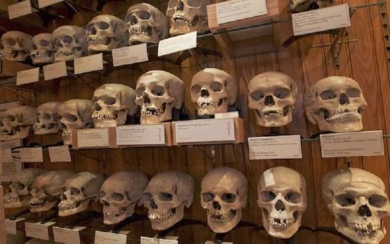Crânes de résistants algériens:Un travail législatif en cours pour les sortir du domaine public français