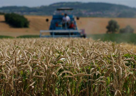 Céréales:L'Algérie dispose d'un stock de 35 millions de quintaux