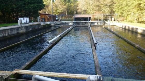 pisciculture:Belles perspectives à l'horizon 2025