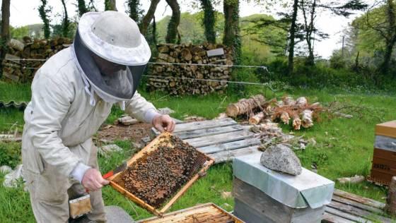 Baisse de la production apicole à Tizi-Ouzou