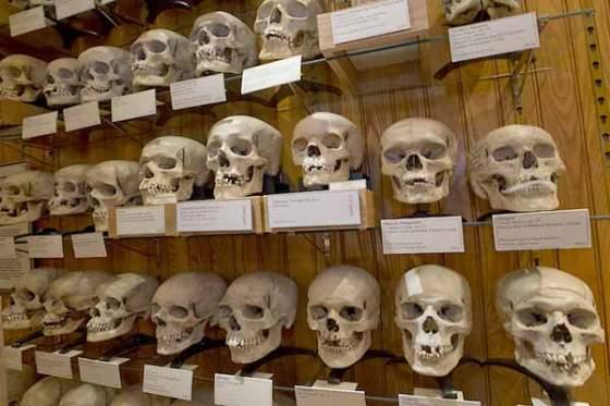 Récupération des crânes des martyrs algériens
