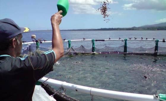 Aquaculture : Signature d'une convention pour l'élevage de poissons