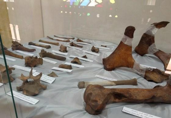 Découverte de fossiles préhistoriques à Djelfa