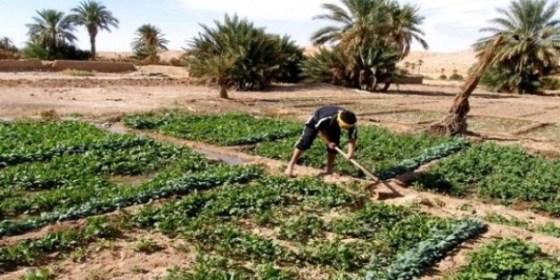 UNPA : Plaidoyer pour le soutien du produit agricole du Sud