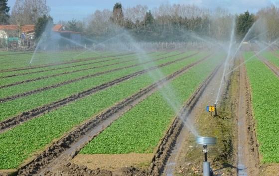 Oran : Relance du programme d'élargissement au développement de l'irrigation