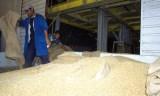 La facture d'importation de blé établie à 1,2 milliards de dollars