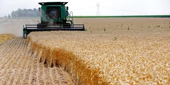 Département d'Etat américain à l'agriculture : L'Algérie importera près de 7 millions de tonnes de blé en 2019/2020
