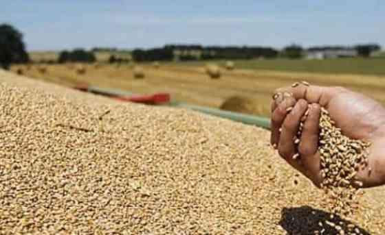 Médéa : Session du Conseil interprofessionnel de la filière céréales