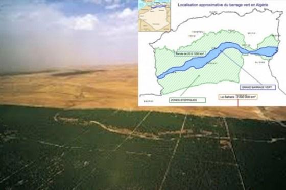 Changements climatiques  : L'Algérie lance un programme national de reboisement