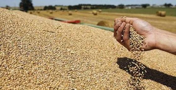 Malgré les assurances du ministre de l'Agriculture : L'Algérie a acquis 50 000 tonnes de blé