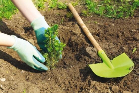Campagne nationale de reboisement : Près de 300000 arbres plantés depuis son lancement