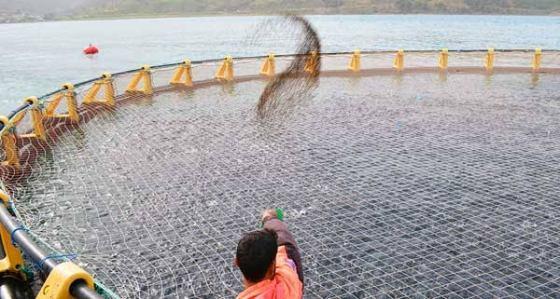 Aquaculture : Des investissements et des projets en nette augmentation