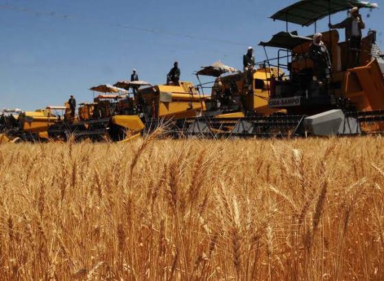 Céréales : Baisse de plus 12% des importations en 2019