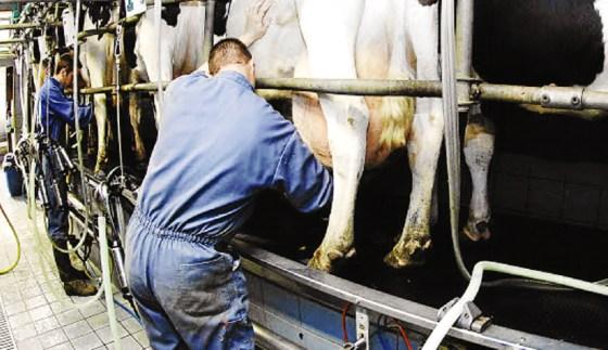 Les producteurs du lait: le litre à 75 DA !