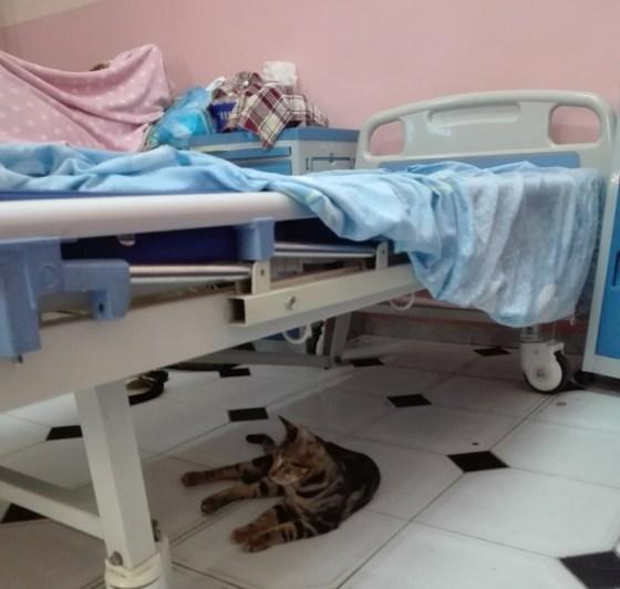 Hôpital « Gueddi Bakir » de Ghardaïa: Le service maternité agonisant