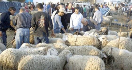 Covid-19: Fermeture de deux marchés à bestiaux à Médéa