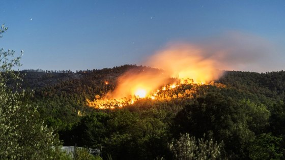 Tizi-Ouzou:Des forêts ravagées par les feux