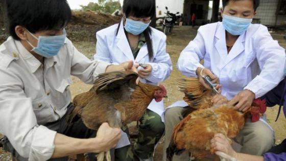 Chine : Un cas humain de grippe aviaire H5N6 signalé