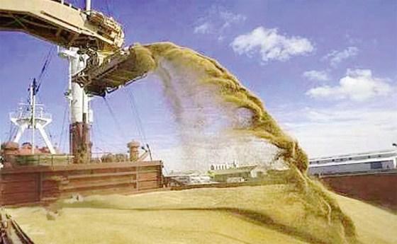 La facture d'importation céréalière de l'Algérie flambe