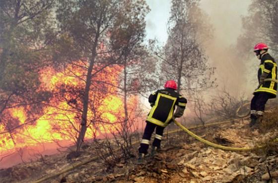 Tizi-Ouzou : Les incendies ont ravagé 28 ha de forêt