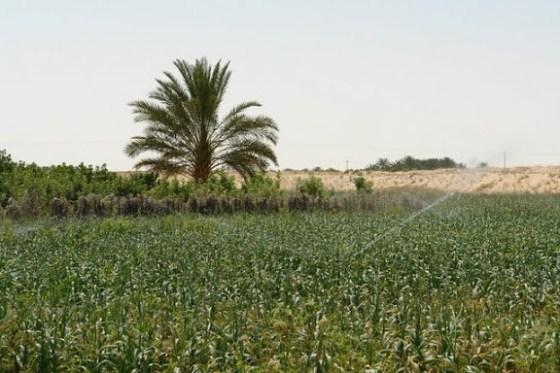 Ghardaïa : Plus de 30.000 hectares pour de nouvelles exploitations