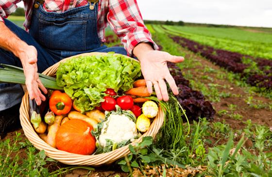 Les experts évaluent la production agricole et agroalimentaire