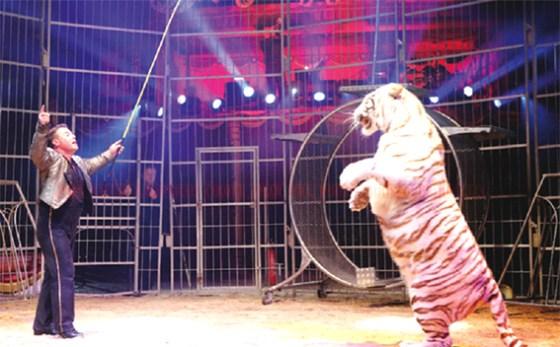 Cirque Amar : Un spectacle magique pour toute la famille