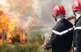 Plus de 2 200 arbres fruitiers partis en fumée à Tablat