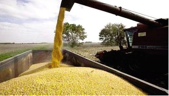 L'Algérie a encore augmenté ses importations de céréales