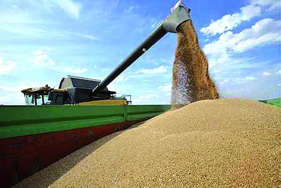La facture céréalière de l'Algérie en légère baisse