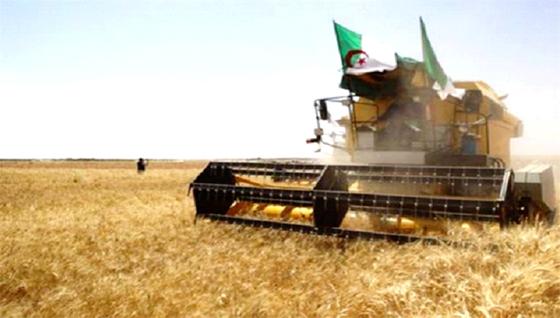 Du blé argentin pour l'Algérie