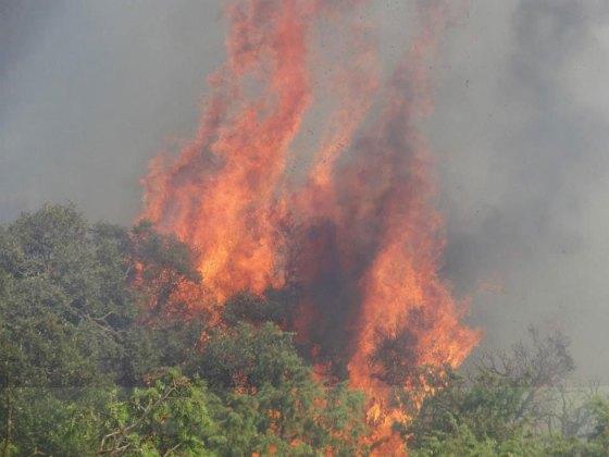 Le parc national de Chrea ravagé par le feu