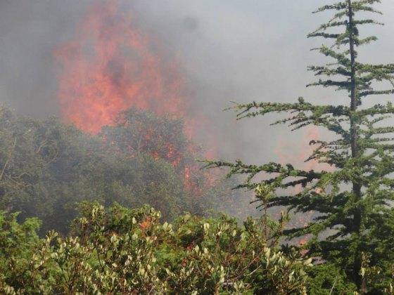 Feux de forêt : Des parcs nationaux réduits en cendres