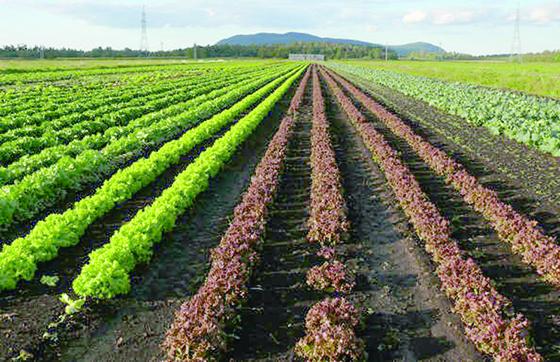 «Les exploitants de terres non cultivées seront exposés à des déchéances»