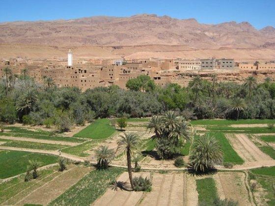 Agriculture à Ghardaïa : Entre qualité et souffrances