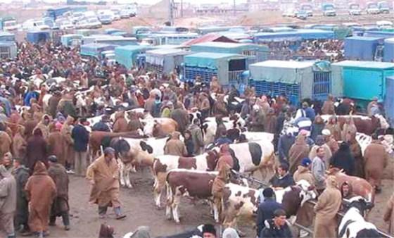 La fièvre aphteuse : Les marchés de bétail rouvriront la semaine prochaine