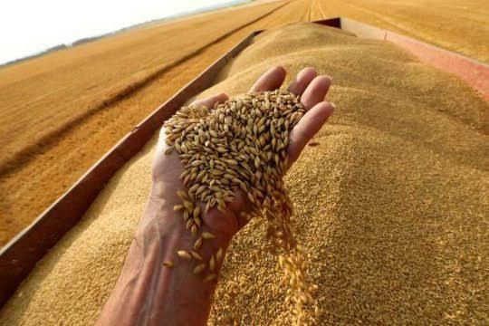 Importation de blé : l'Algérie se tourne vers la Russie