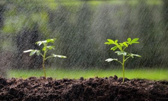 Agriculture: Des pluies salvatrices pour les semailles