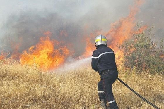 """Les feux de forêts visaient à """"déstabiliser le pays"""""""