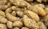 Médéa : Déstockage de 120.000 quintaux de pomme de terre
