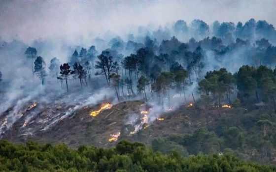Tizi Ouzou  : 500 ha de forêts ravagés par les flammes